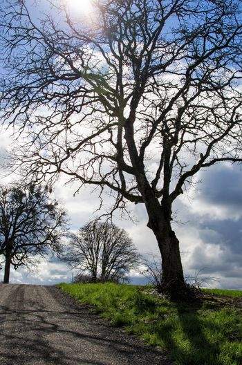 Bare Tree Beauty In Nature Branch Day Grass Landscape Nature No People Outdoors Scenics Sky Sunlight Tranquil Scene Tranquility Tree Tree Trunk
