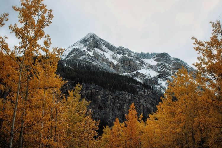 Scenic view of snowcapped mountains during autumn against sky