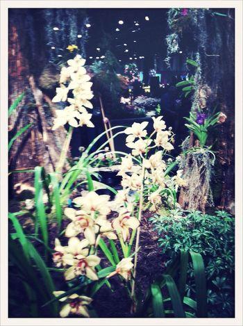 Remembrances Flower AMPt_community AMPt_ Community Exhibition