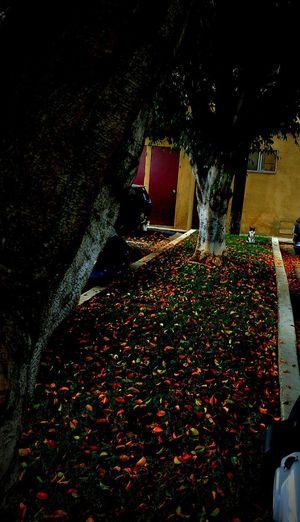 Gato entre hojas de otoño