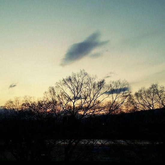 切ないけど好きな時間 Nightfall Sunset Sky Blue Brown Tree Cloud Riverside 武庫川 Japan