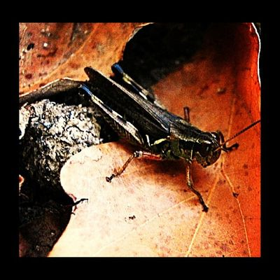 Insecto Macroaddictsanonymous Insectsofinstagram Anthropods_anonymous Insect_perfection