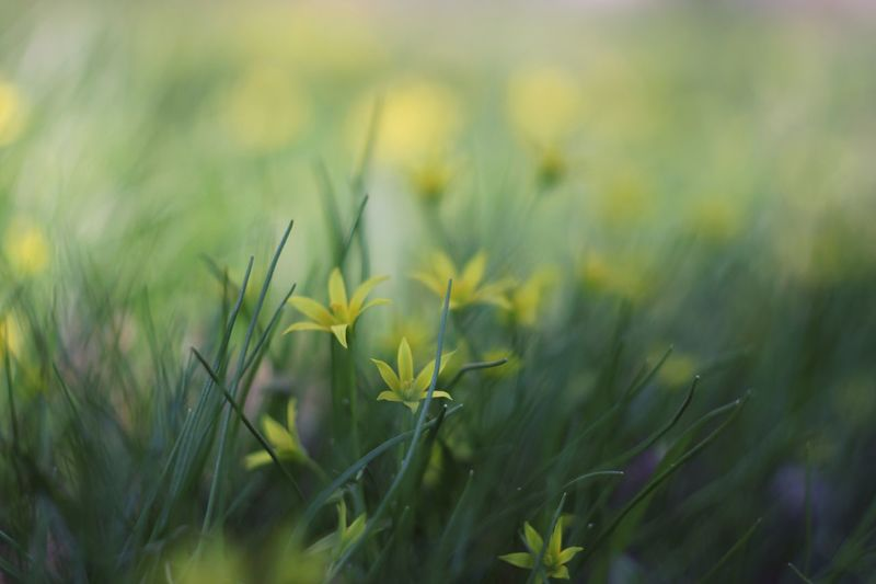 Yellow Flower Plant Growth Field Beauty In Nature Green Color Land Freshness Nature No People Close-up Selective Focus Flower Landscape Outdoors Crop  My Best Photo