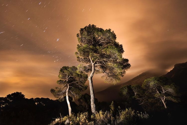 Night Photography Star - Space Tree Night Atmospheric Mood Dramatic Sky Majestic Beauty In Nature Tranquility Long Exposure