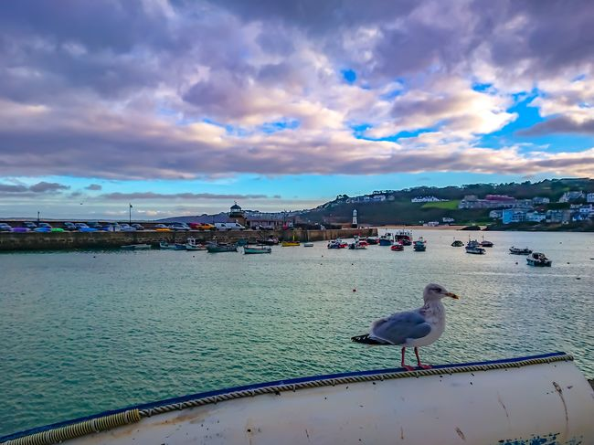 St ives beachscape Bird Sea Water Animals In The Wild Cloud - Sky Horizon Over Water Animal Themes Sky Day No People Outdoors Animal Wildlife Beach City Stivesharbour Seaside Beach Sea Seascape Clouds And Sky Seascape Photography Sunset Scenics Beauty In Nature Rural Scene Landscape Beachphotography