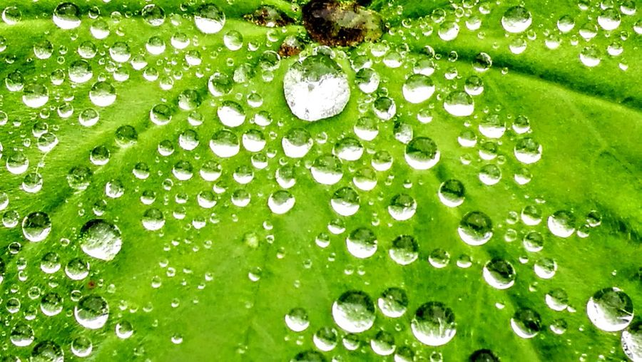 So good Raindrops...so clear...so exactly.. Green Color Nature Leaf Beauty In Nature No People Close-up Grass Outdoors Freshness Plant Growth Full Frame Day Backgrounds Water Fragility Drop Wendland GetbetterwithAlex Originalpicture Beauty In Nature