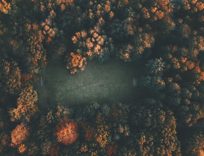 Directly Above View Of Trees In Forest During Autumn
