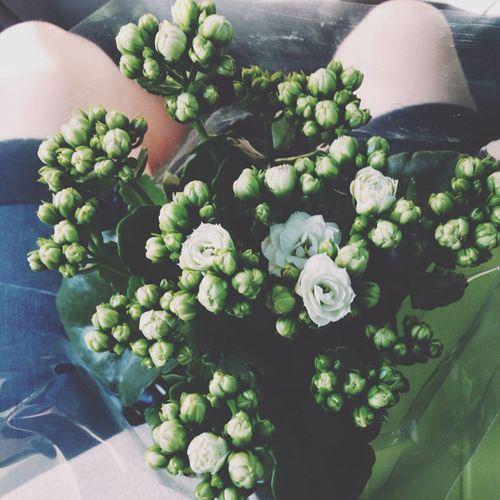 Flowers Wite Kalanchoe I Enjoy It