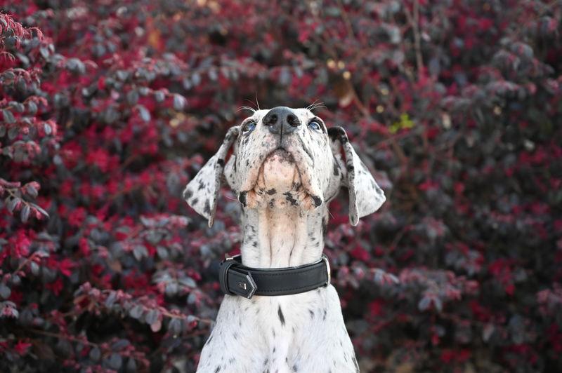 Portrait of dog standing against plants
