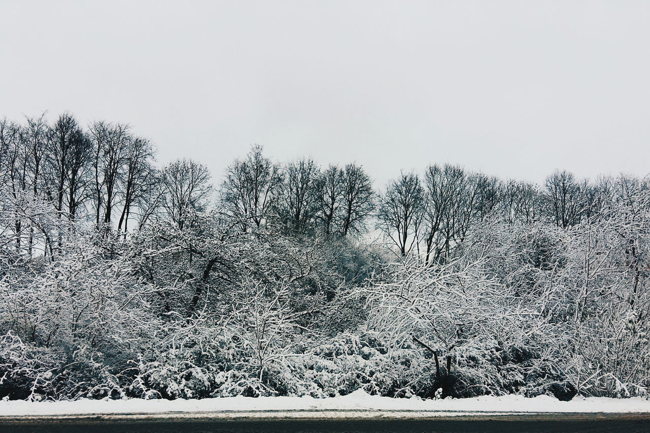 nature, winter, tree, snow, cold temperature, beauty in nature, tranquility, no people, outdoors, tranquil scene, day, clear sky, bare tree, scenics, landscape, sky