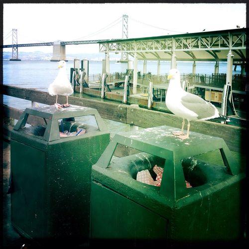 Birds, Gulls, Sky Sea Gull Hipstamatic Trash