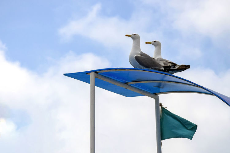 Low angle view of seagull perching