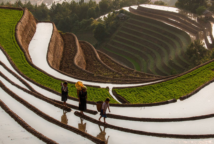Nature High Angle View Real People Day Leisure Activity Men Lifestyles Group Of People People Walking Sunlight Scenics - Nature Plant Adult Outdoors Full Length Pattern Women Beauty In Nature Group Rice Terraces Paddy Field Working Kids Child Three Going Home Vietnam North Vietnam