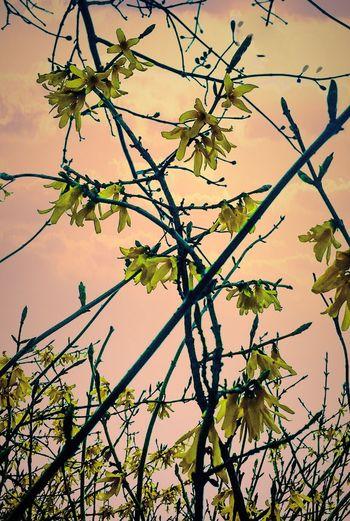 Spring Flowers Springtime Spring Into Spring Flowering Tree Pink Sky Budding Tree Budding Oswego, IL