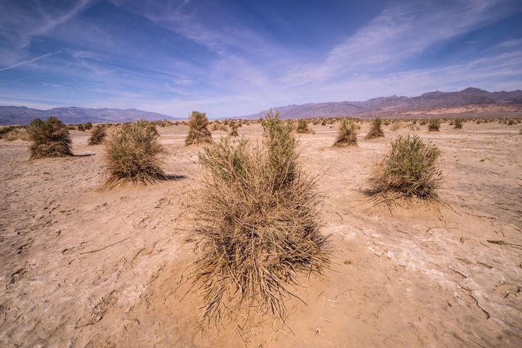 Arid Climate