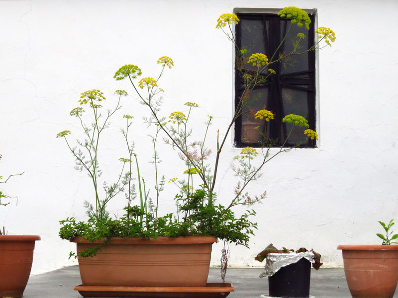Architecture Built Structure Flower Flower Pot Front Or Back Yard Garden Garden Photography Greece Green Growth Healing Healing Herbs Herb Herbs Monastery Nature No People Plant Plant Plants Pot Potted Plant Wall White Wall Window