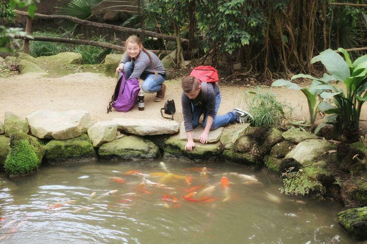 Grandchildren Koi Fish Koi Pond Lovelynatureshots MONDOVERDE365.NL Bns_nature Canon DSLR With 75-300mm Telephoto Lens Streamzoofriends Streamzoofamily