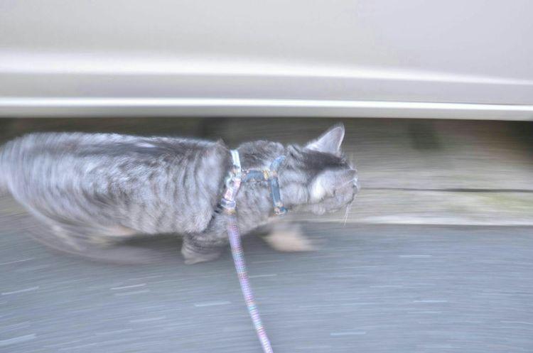 突っ走るにゃ ねこ Cat Playing With The Animals ダンディ KAWAII Dandy