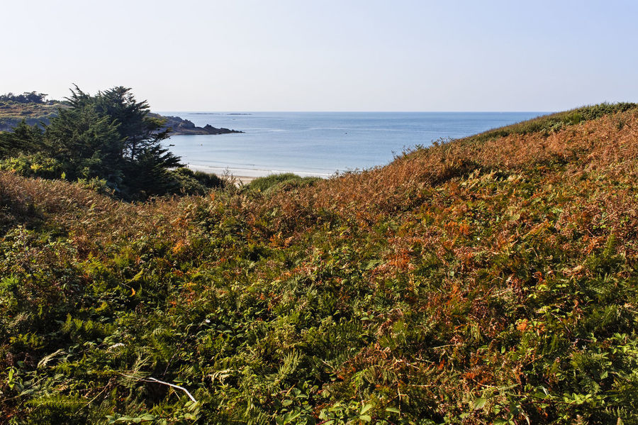 North coast of Brittany in summer Brittany English Channel France Beach Beauty In Nature Clear Sky Day Ferns Grass Growth Horizon Over Water Ille-et-vilaine Landscape Nature No People Outdoors Plant Scenics Sea Sky Summer Tranquil Scene Tranquility Tree Water