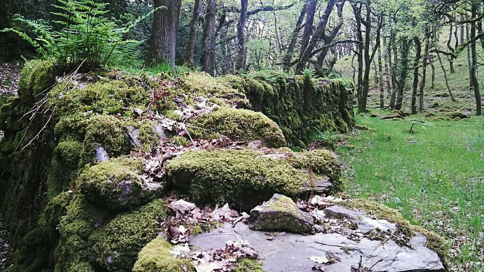 WoodLand Wall Mossporn Moss Fatherford Fairies Fairy World Bluebell Wood Ancient Woods Devon Okehampton