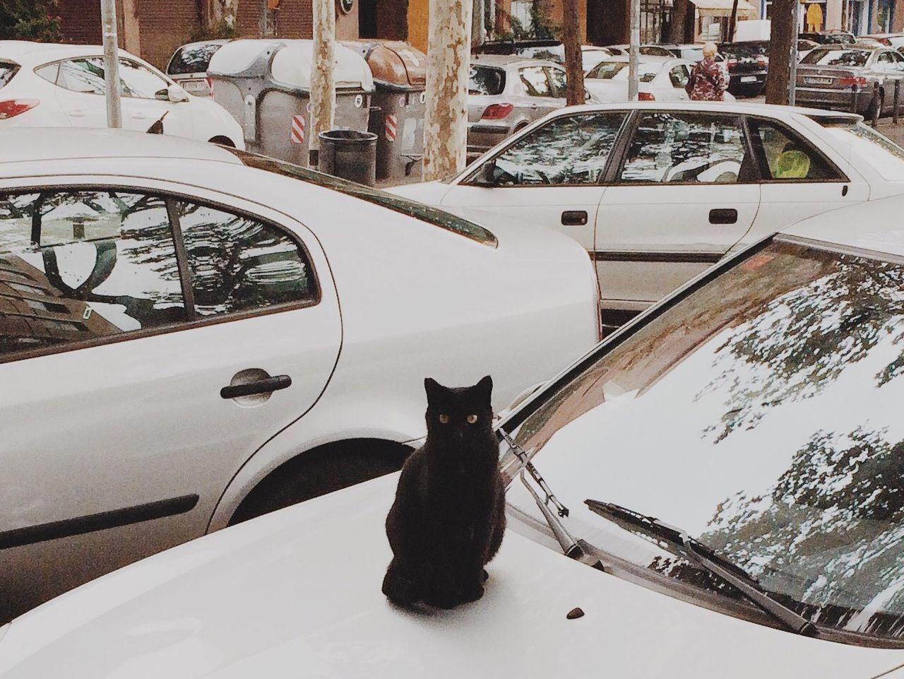 Black cat sitting on car in parking lot