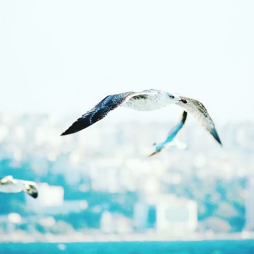 Glitch ı Love My City Enjoying Life Izmirdeyasam Türkiye Flying Bird Relaxing Photographer Photooftheday Photoshoot