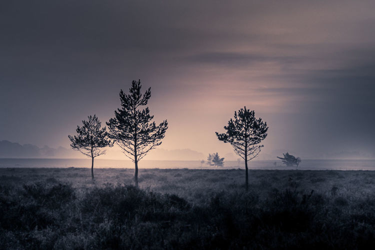 Silhouetted trees on the heath at sunrise