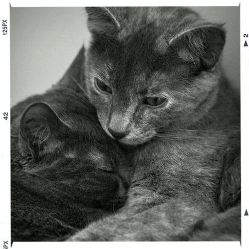 Stella & Ender Sisters♡ Catlover My Kitties  Love