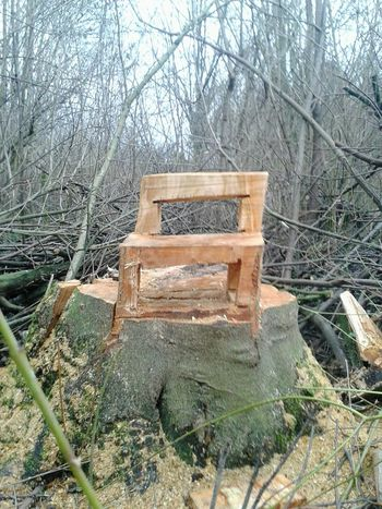 Baum-Stuhl im Wald gesichtet !! Wood - Material Unterwegsunddraußen Holz Kunst WoodChair Kunst Ist Was Du Daraus Machst Im Wald Lol :) Art Is Everywhere