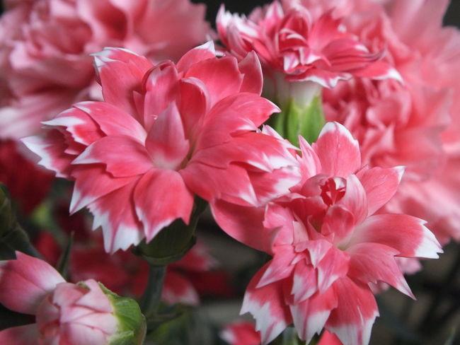 Flower Flowerporn Beautiful Flower Flowers Cute♡