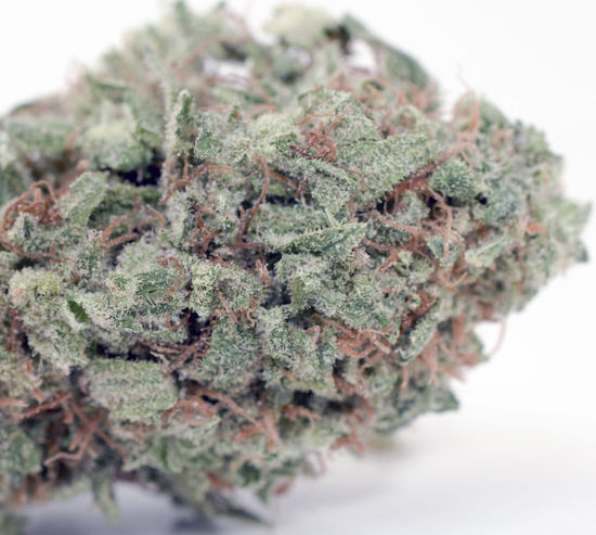420 ICMAG 2015 Breeders Cup - Best Sativa No.5 - NL5 Mist by Greenhouseclos 420 420life Alternative Medicine Amsterdam Breederscup Canabis Cannabis Cannabiscup Close-up Herbal Herbal Medicine Icmag International Cannagraphic Studio Shot Weed Weed Life