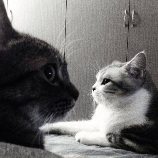 Blac&white  Kittys