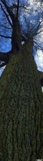 Trees Huge Huge Tree Impressive
