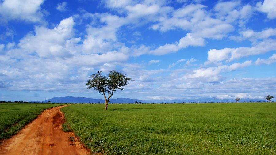Africa Kenya Tsavo Est Nature Tree Sky Cloud On Moves Road Cloud - Sky Environment Plant Field Grass Land Tranquility The Way Forward Beauty In Nature Landscape