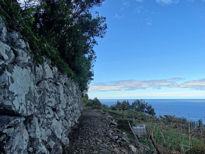 Coast in Madeira. Sky Plant Water Sea Tranquility Tree Beauty In Nature Tranquil Scene Scenics - Nature Nature Growth No People Day Land Rock Blue Solid Mountain Outdoors Stone Wall Pathway Path The Way Forward Coast