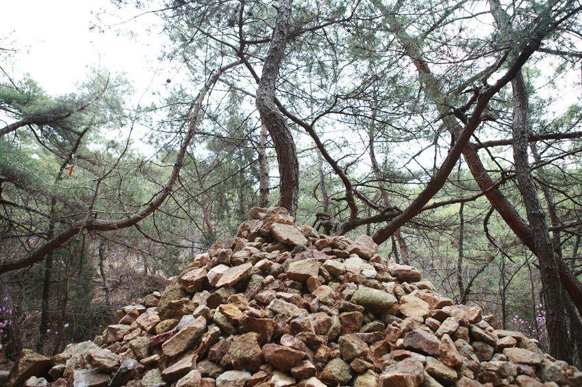 Moring Tree Stones Hopefully Slowlife So 바른생태살림원   be the Nature