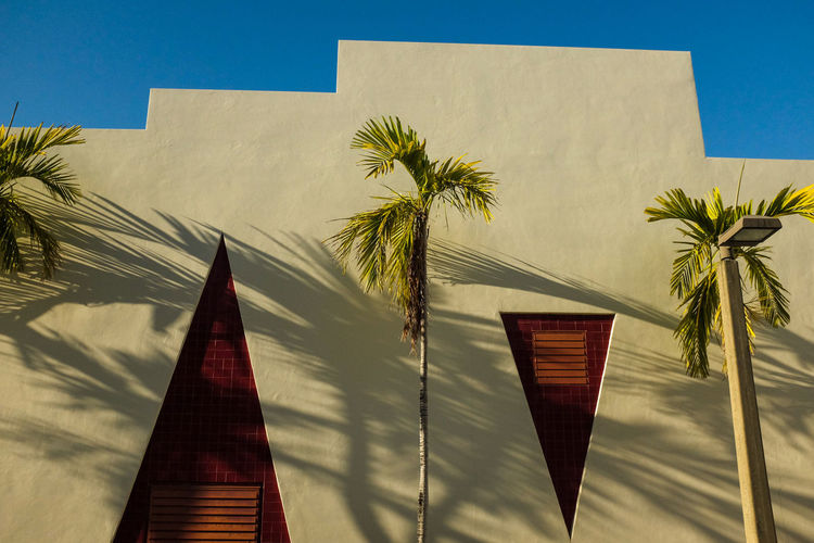 Low angle view of palm trees against building
