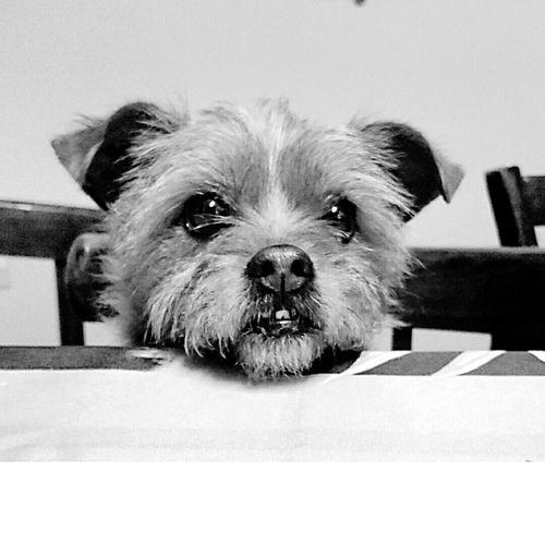 Black & White Chiens PortraitQuoi ma gueule ?!?