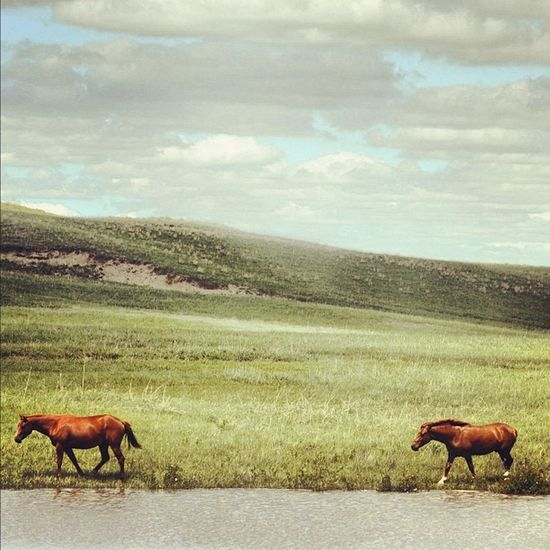 Tomorrow, I'm going to the land of my nativity. Nebraska. #sandhills #nebraskalove#jj#jj_forum#gcs#the_guild#primeshots#horses#hills#igdaily#photooftheday#igers#igersnebraska#horse#follow Horses Photooftheday Hills Follow GCS Igers IGDaily Jj  Jj_forum The_guild Primeshots Sandhills Untamedamericas Igersnebraska Jj_forum_0314 Horse Nebraskalove