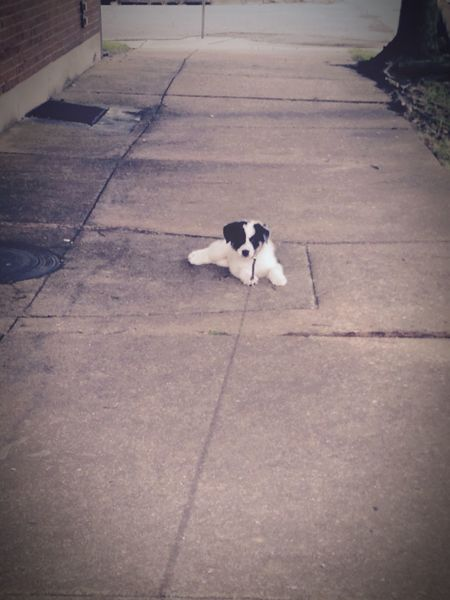 My pup refusing to walk. Puppy Walking Around Refusal No Walking Stubborn Animals Animal Pets Animal Love Animal Portrait Pets Corner