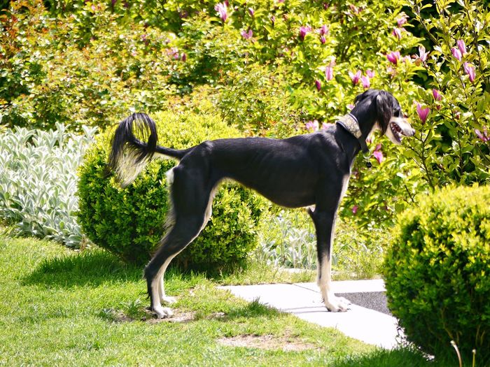 Side view of dog standing on land
