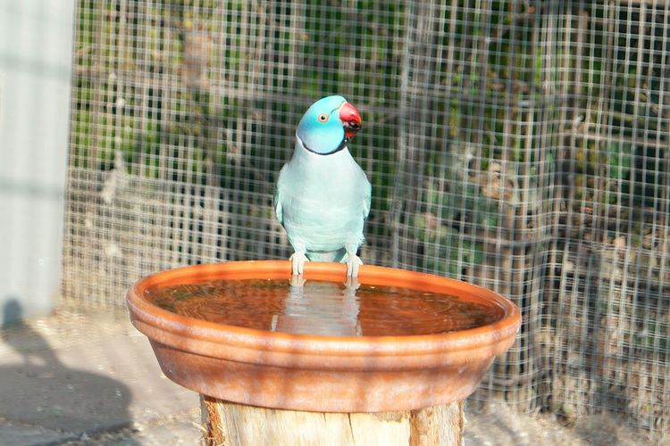 Parrot Perching On Container Filled With Water