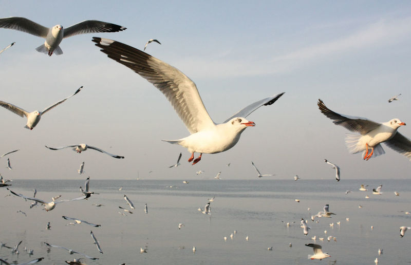 Animal Themes Animal Wildlife Animals In The Wild Beauty In Nature Bird Day Flying Mid-air Motion Nature No People Outdoors Sea Seagull Sky Spread Wings Togetherness Water