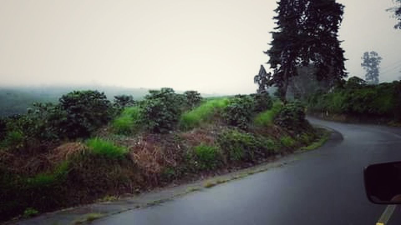 road, tree, water, no people, nature, scenics, outdoors, plant, landscape, day, sky, beauty in nature