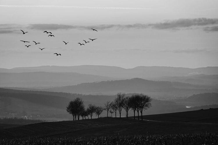 Birds flying over mountain range against sky