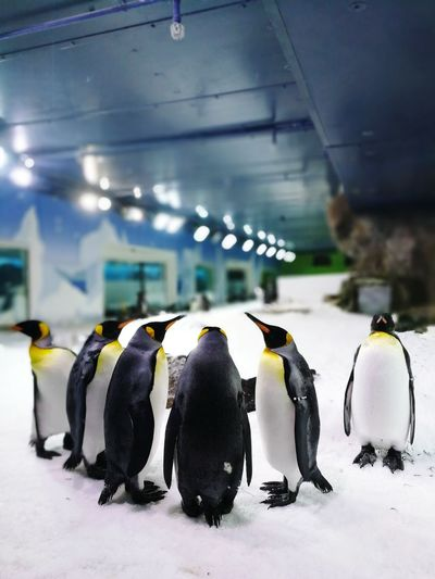 Penguins Penguin Animal Wildlife Animal Bird Colony No People Animals In The Wild Water Nature Animal Themes Full Length Indoors  Sea Life Day Cold Temperature Snow Winter Sea Sea Bird Sea And Sky