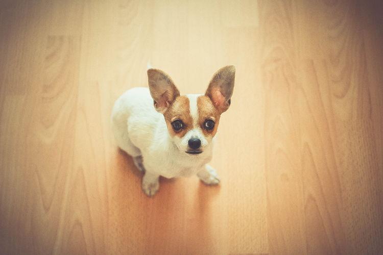 High angle view of dog at home