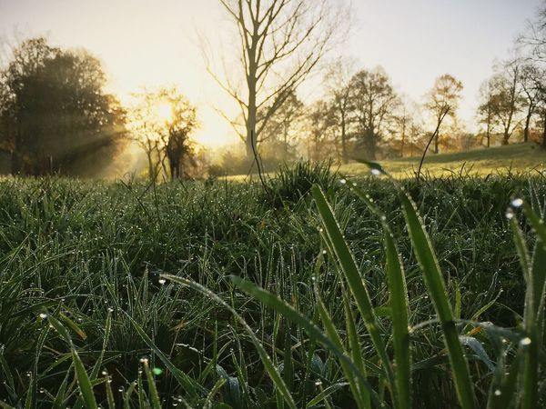 Early Morning Morning Dew Sunrise Nature Nature_collection Green Landscape Mint By Motorola Make Magic Happen Nature On Your Doorstep
