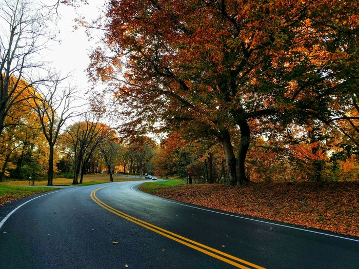 Trees Fall Branch Leaves Change Autumn Double Yellow Line Empty Road Treelined