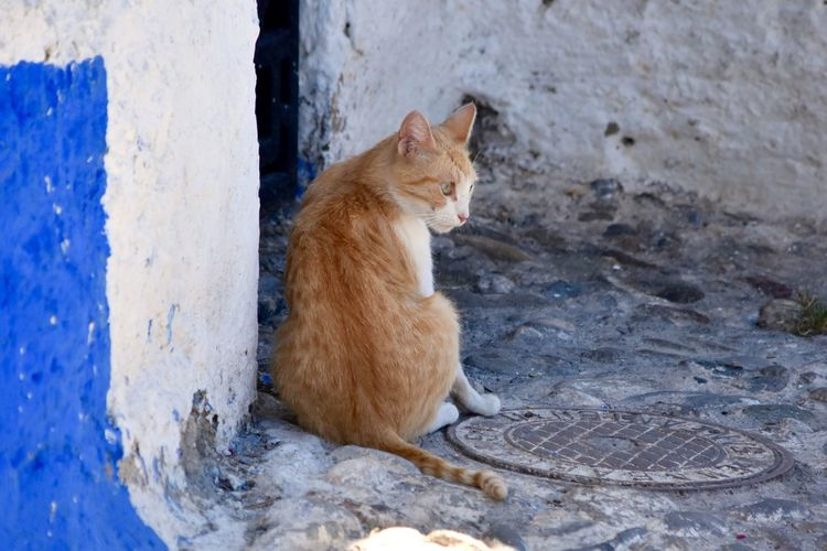 Rear view of alert cat against wall